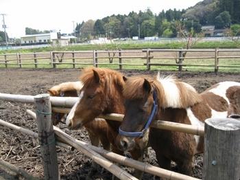 みずほの馬